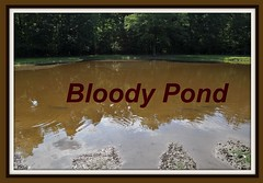 Bloody Pond (King Kong 911) Tags: fish field battle shiloh confederatesoldiers bloodypond unionsoldiersmanydied tennesseebattlefieldnationalparkcivilwar