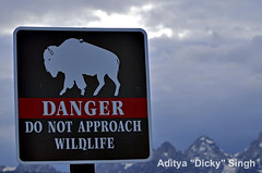 ADS_USA_000004640 (dickysingh) Tags: travel usa india danger america outdoor wildlife board roadtrip aditya signage grandteton singh dicky adityasingh ranthamborebagh theranthambhorebagh wwwranthambhorecom
