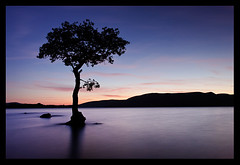 Milarrochy Bay (NorthernXposure) Tags: longexposure sunset tree water bay hills loch lochlomond scottishloch milarrochy