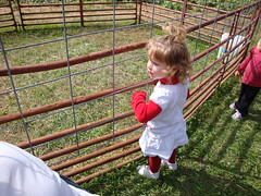 Lilli Standing At The Goat Pen