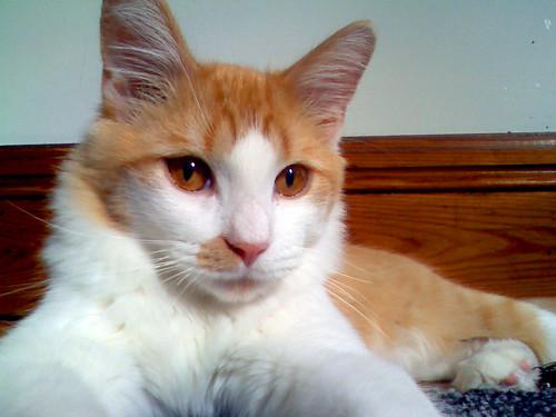 new cat - Luca