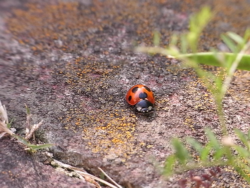 RIMG1361 昆虫