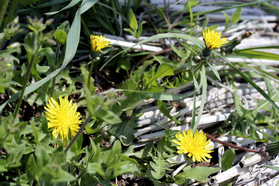 Flower (6)