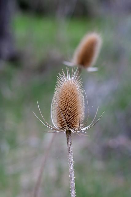 alder springs12 (1 of 1)