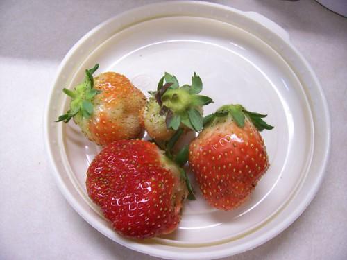 Fresh strawberries in January!
