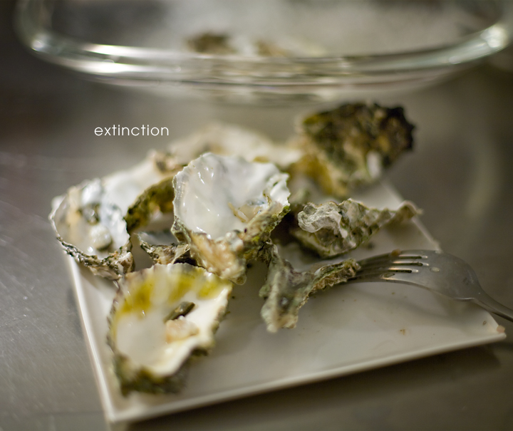 Extinct Oysters