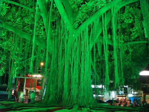 Green + tree