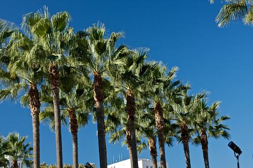 Palm Trees outside Union Station