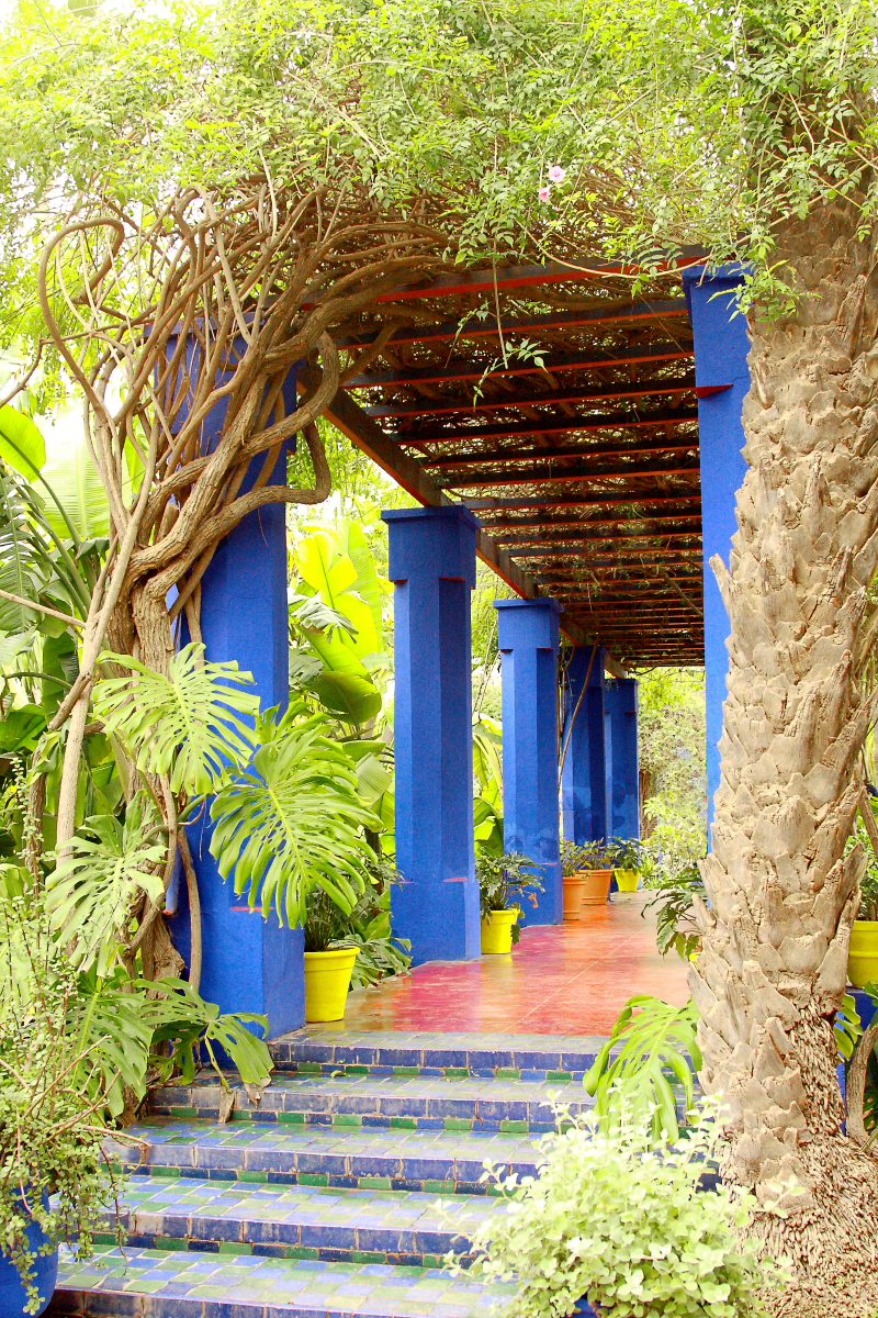 Moroccan Series:Marjorelle Gardens