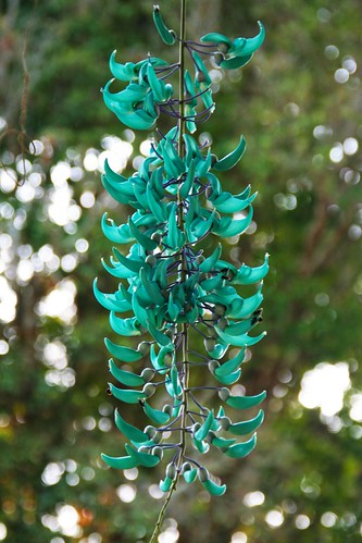 nature flowers Jade Trepadeiras turquoise