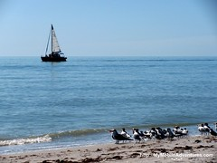 IMG_0362-Sanibel-sailboat-seagulls-beach