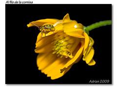 Al filo de la cornisa (Adrian D. Zussino) Tags: flower macro bug 50mm flor olympus om f18 insecto e500 uro themacrogroup ftna