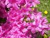 Spring, 2008 065