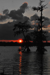Cutout Sunset (Jobe Roco) Tags: sunset sky orange cloud reflection tree water photoshop manipulated cutout evening nikon louisiana outdoor swamp spanishmoss cypress selectivecolor d60 lakemartin 3541 cmwdorange