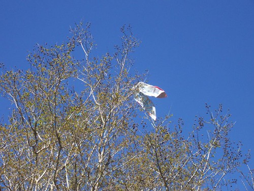 Charley Brown's kite