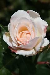 Powerscourt, Ireland (tapenade) Tags: ireland flower canon garden powerscourt natureselegantshots