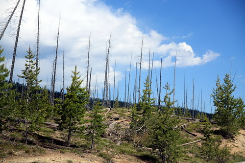 Aftermath of Wildfire