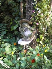 Moonlight Garden! 5