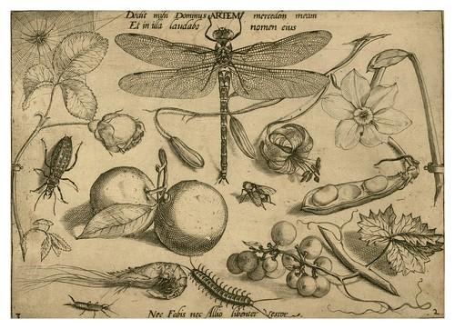 005-Archetypa studiaque patris 1592