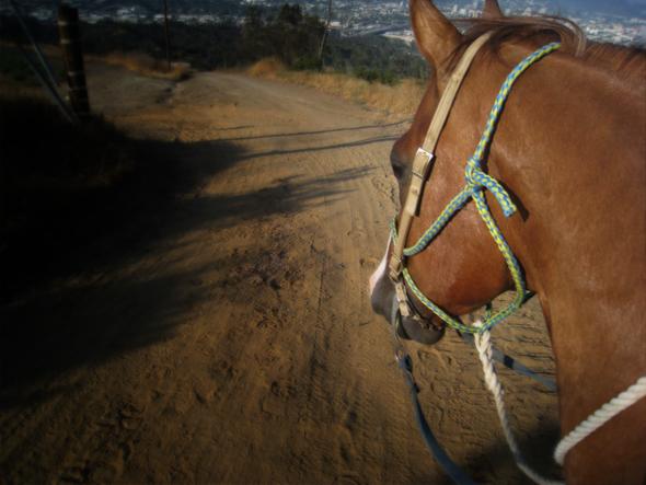 072509_HorsebackRiding02