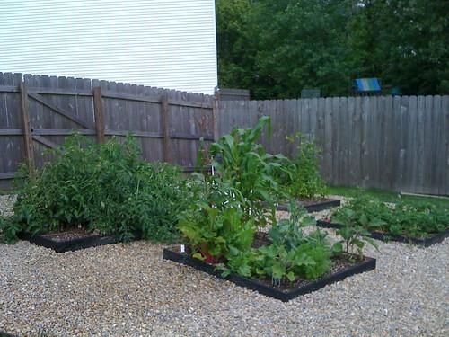 Garden 7/19/09
