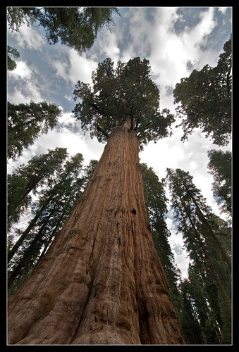 General Sherman Largest tree in the world