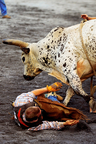 The announcer had bull-riding pegged as the worlds most dangerous sport, and often reminded the audience of this. Its probably true. I dont doubt it.