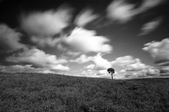 Cloud power! (Stu Meech) Tags: new blackandwhite bw tree clouds forest nikon stu horizon sigma lone lonely 1020mm curved avon speeding burley tyrrell the meech d40 nd110