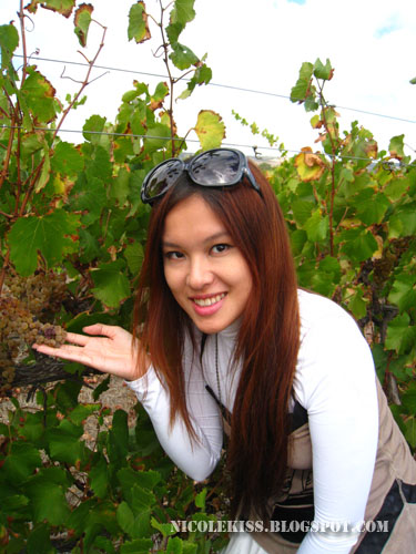 me and grapes on vines