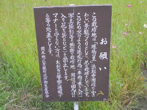 法起寺三重塔とコスモス-08