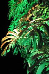 brazil's next top plant (thefuturistics) Tags: park red sculpture music tractor art industry glass pool dinner swimming garden landscape lunch mirror mar airport swan concert paradise contemporary band harry center sonic piscina plastic dirt installation huge burlemarx karl opening lightning janetcardiff expensive thunder blackswan invitations olafureliasson galore megalomania paulmccarthy artolindsay matthewbarney pavillions yayoikusama geir curator dangraham capacete dougaitken cildomeireles tunga jorgemacchi inhotim chrisburden hansulrichobrist dorissalcedo curador strikestwice beamdrop brumandinho delamalmina sonicpavillion novenovosdestinos