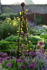 42558 (Clive Nichols) Tags: morning light west metal bulb garden sussex early chalk purple jan howard sandy tripod limestone onion allium herb walled sensation catmint nepeta cowdray clivenichols