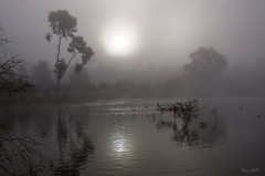 Morning Fog (Nick Chill Photography) Tags: california morning fog sunrise photography still nikon peace image sandiego stock dream foggy peaceful tranquility explore zen meditation spirituality spiritual tranquil dagobah dx lakemurray missiontrailsregionalpark d90 dailyrayofhope nickchill