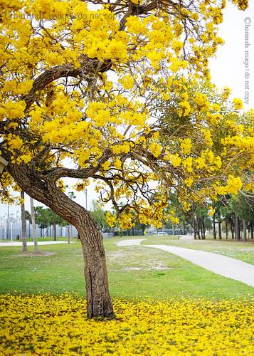 tabby tree