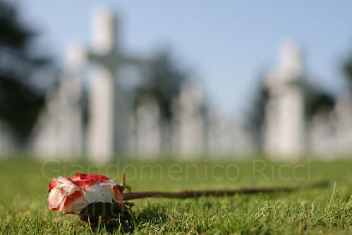 American cemetery, Normandy (by: Giandomenico Ricci, creative commons license)