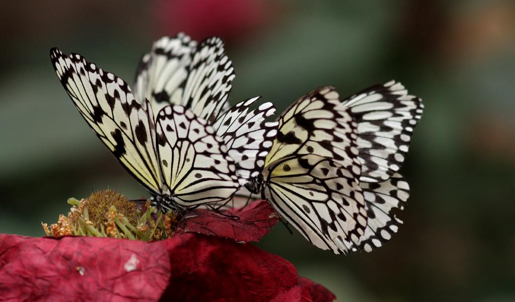 La serre aux papillons la queue en yvelines - Page 4 5795913555_9db7acde91_o