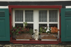 window with cat, Golbach (René Mouton) Tags: windows window cat germany deutschland kat wandelen eifel ramen huis poes nordrheinwestfalen raam duitsland vensterbank bloembakken timberframing hemelvaart wandelroute fernwanderweg christihimmelfahrt etappe5 golbach june2011 eifelsteig gemündklostersteinfeld