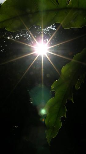 097.夕陽與樹葉
