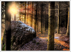 Dispersion (Jean-Michel Priaux) Tags: wood autumn winter light sunset sun sunlight art nature rock forest painting landscape soleil nikon dream line peinture dreaming paysage hdr bois anotherworld fret dispersion d90 outstandingshots priaux anawesomeshot aplusphoto frpix vosplusbellesphotos francesmasterpieces magicunicornverybest