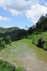 Chamba, Uttarakhand (India Water Portal) Tags: india uttaranchal agriculture irrigation chamba uttarakhand geo:dir=131 june2008 geo:lat=30323565 geo:lon=7838074