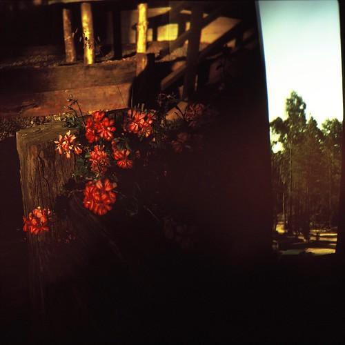 flowers_lomo_holga