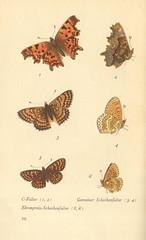 papillons d 6