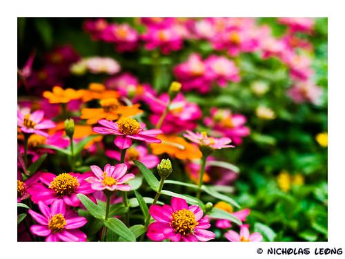 Sentosa Floral Fest