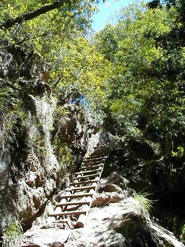 ladder trail in the ascent to Table Mountain