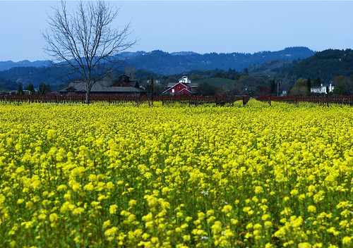 Napa Valley in Spring, view from the Tour de Cure route