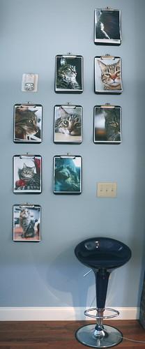 Cat Installation