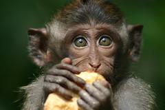 Baby monkey. Ubud, Bali - Indonesia. 2007.