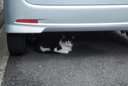 Today's Cat@20090728