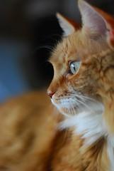 DSC_8759l (tiggman2003) Tags: catnipaddicts
