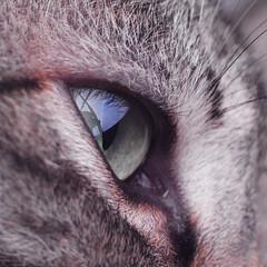 in eye